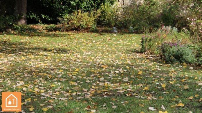 utiliser des feuilles mortes pour son jardin