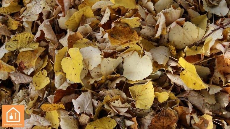 tranwformer les feuilles mortes den terreau