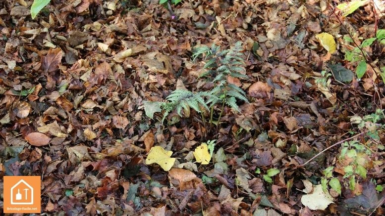 utiliser les feuilles mortes dpour protéger les plantes
