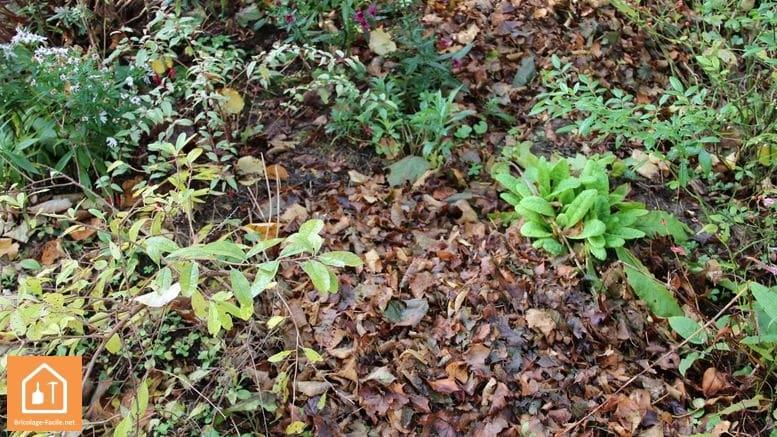 utiliser les feuilles mortes pour pailler les massifs