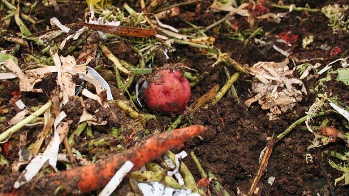 Compost à partir de déchets végétaux