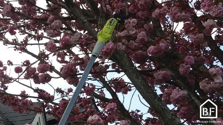coupe de branches en hauteur avec le Ryobi