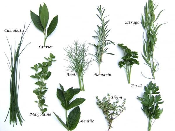 Tout savoir sur les plantes aromatiques bricolage facile for Toutes les plantes