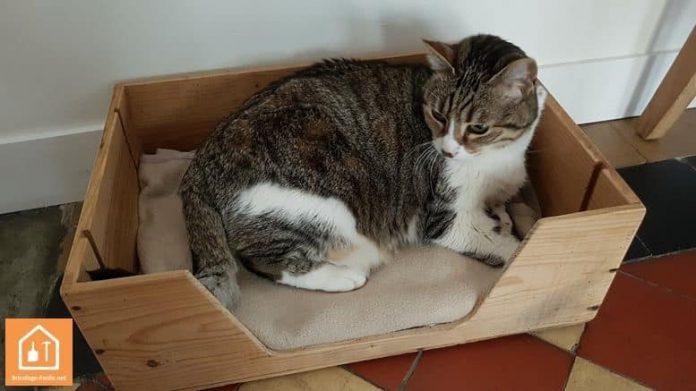 niche pour chat avec une caisse en bois