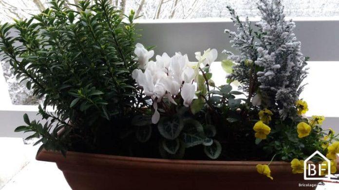 Plantes en pot sur un balcon