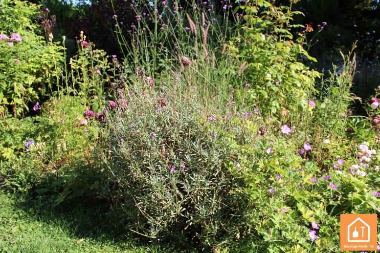 Taille buisson Gardena